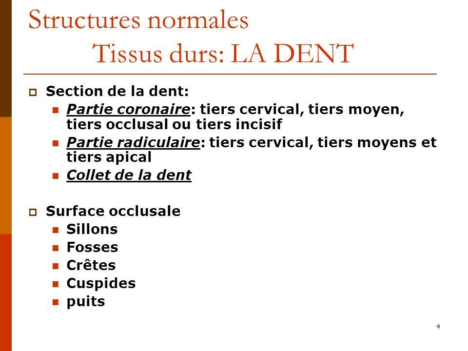 Structures normales Tissus durs: LA DENT
