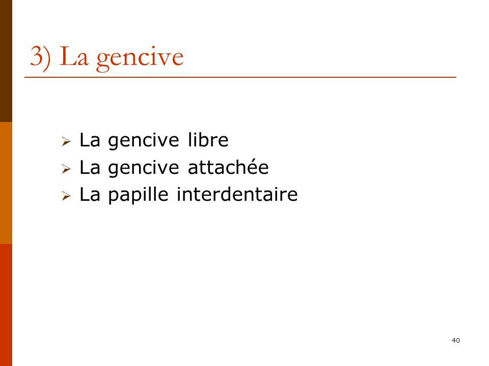 3) La gencive La gencive libre La gencive attachée