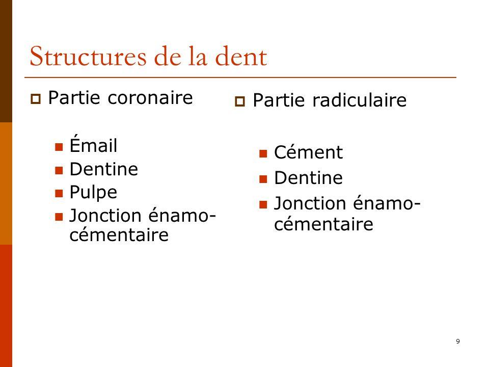 Structures de la dent Partie coronaire Partie radiculaire Émail Cément