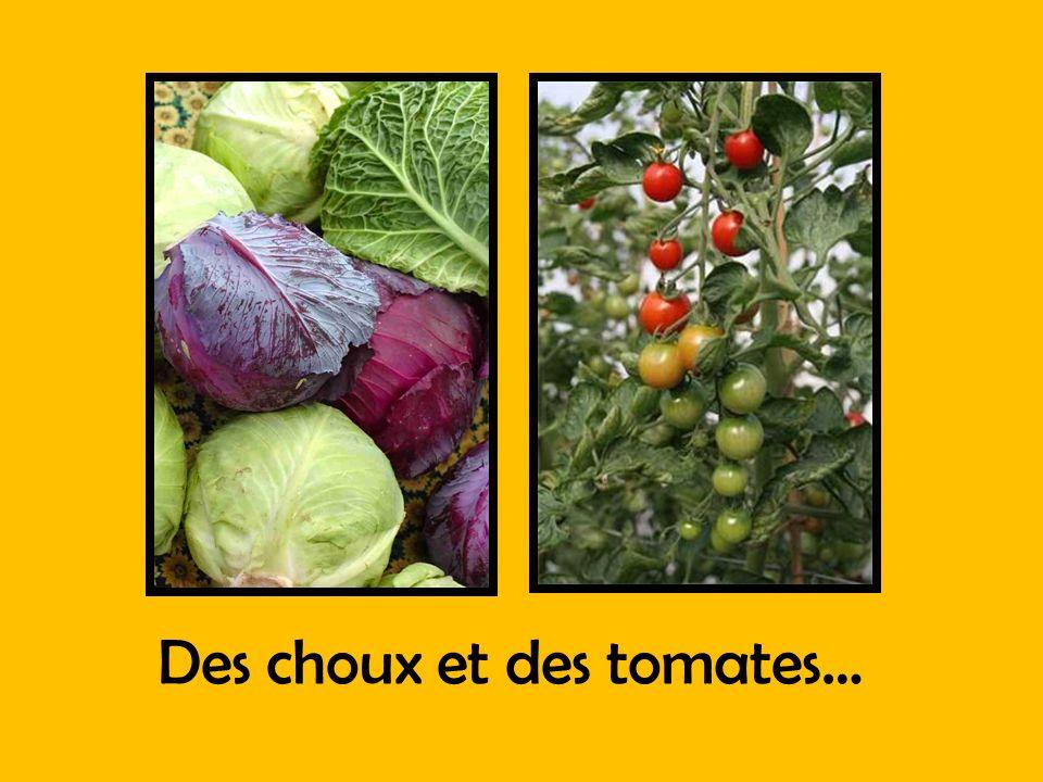 Des choux et des tomates…