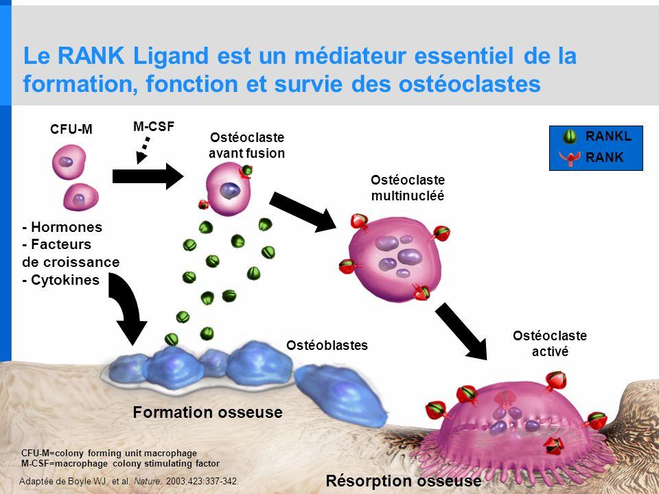 Le RANK Ligand est un médiateur essentiel de la formation, fonction et survie des ostéoclastes