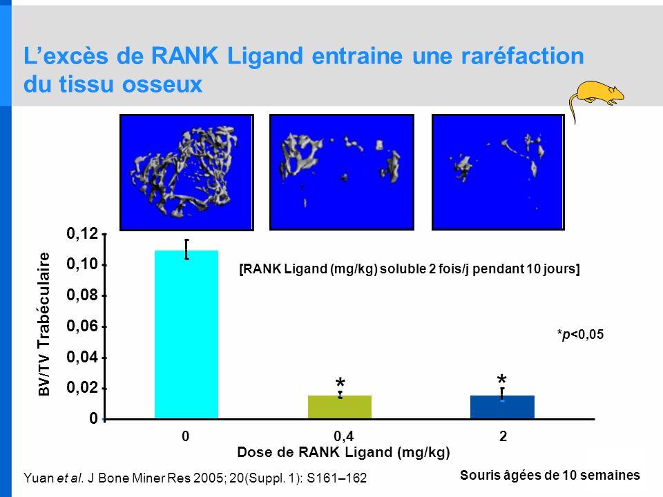 * L'excès de RANK Ligand entraine une raréfaction du tissu osseux 0,12