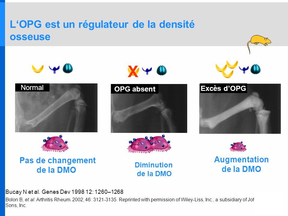 L'OPG est un régulateur de la densité osseuse