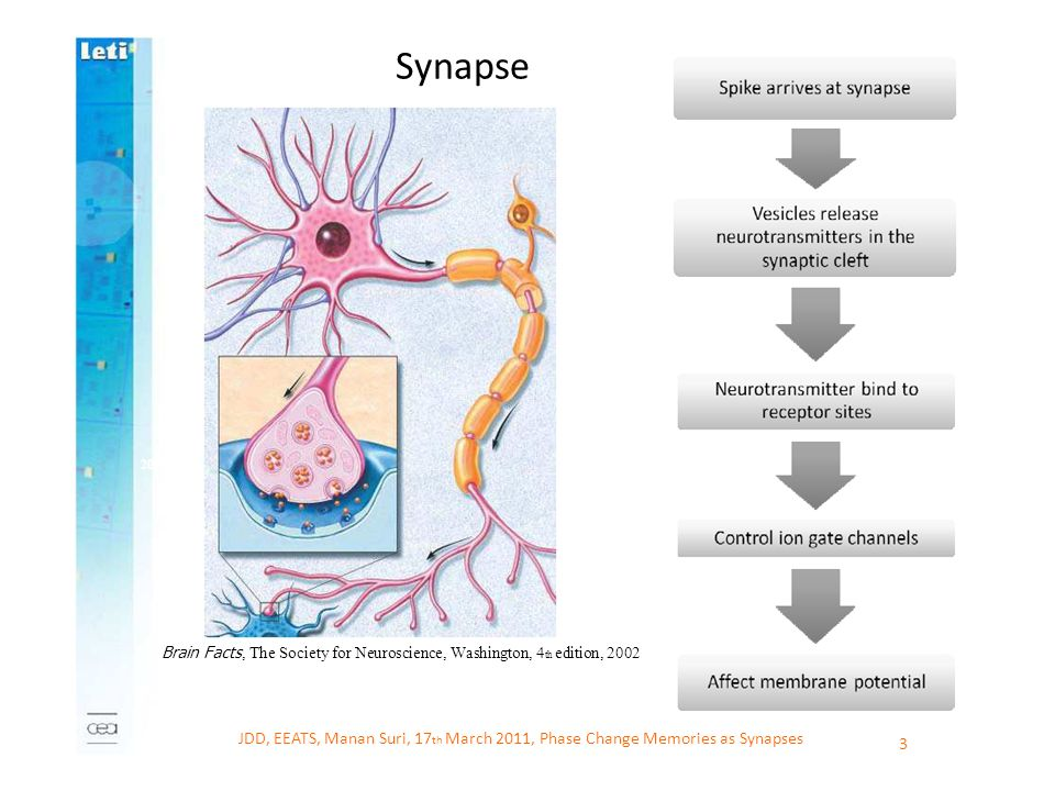 Synapse 2007. Brain Facts, The Society for Neuroscience, Washington, 4th edition, 2002.