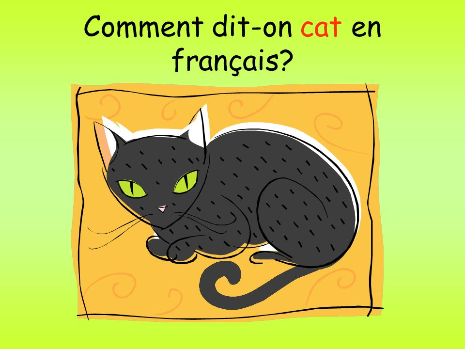 Comment dit-on cat en français