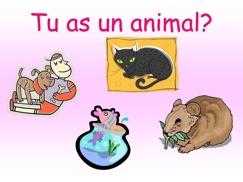 Tu as un animal