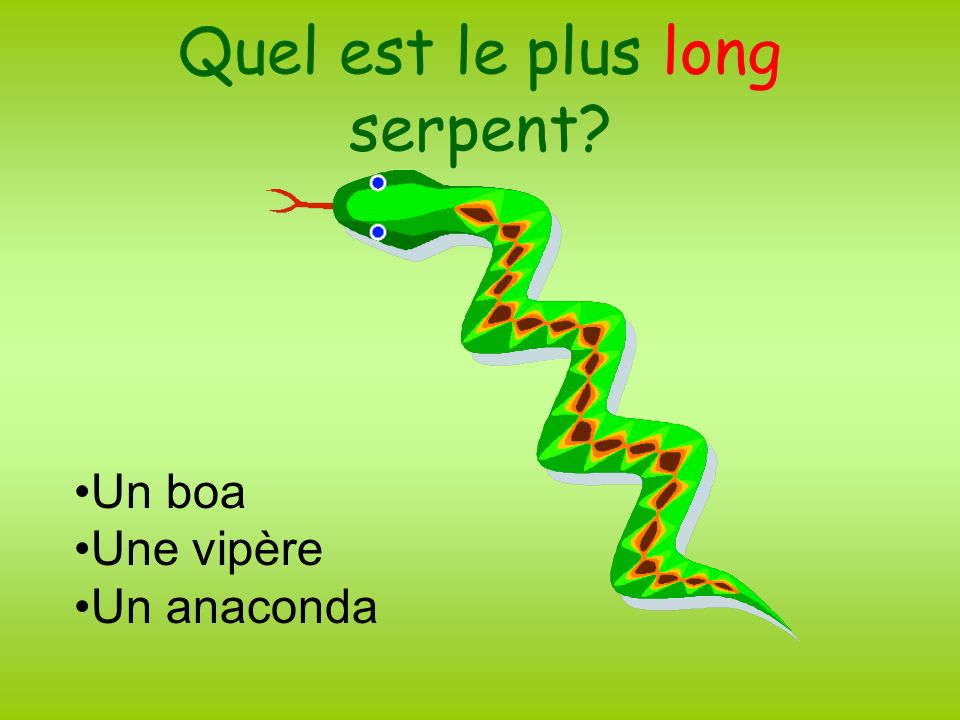 Quel est le plus long serpent