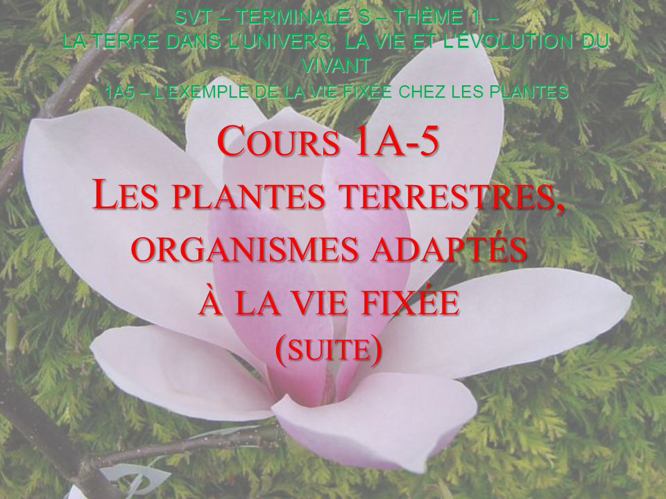 1A5 – L'EXEMPLE DE LA VIE FIXÉE CHEZ LES PLANTES
