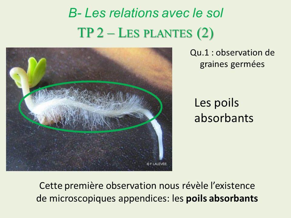 TP 2 – Les plantes (2) B- Les relations avec le sol