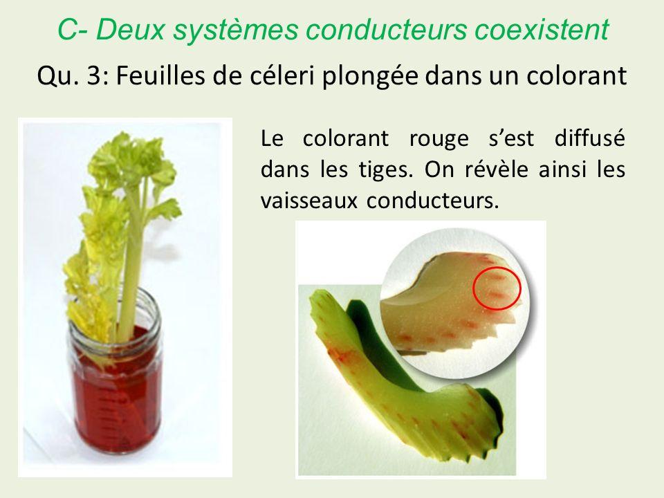 Qu. 3: Feuilles de céleri plongée dans un colorant