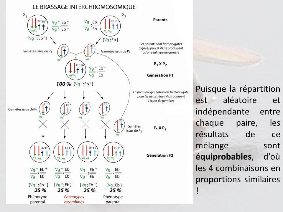 Puisque la répartition est aléatoire et indépendante entre chaque paire, les résultats de ce mélange sont équiprobables, d'où les 4 combinaisons en proportions similaires !