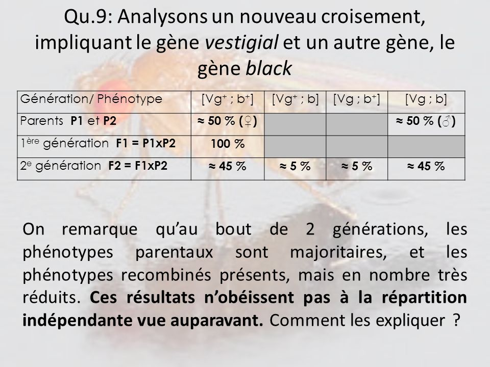 Qu.9: Analysons un nouveau croisement, impliquant le gène vestigial et un autre gène, le gène black