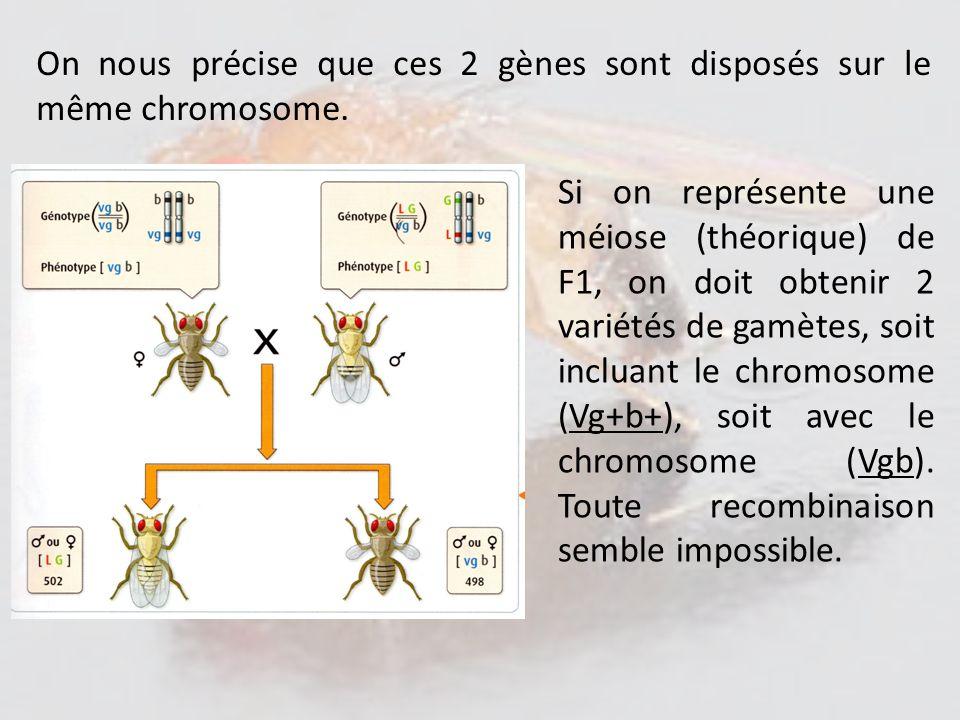 On nous précise que ces 2 gènes sont disposés sur le même chromosome.