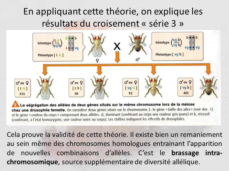 En appliquant cette théorie, on explique les résultats du croisement « série 3 »
