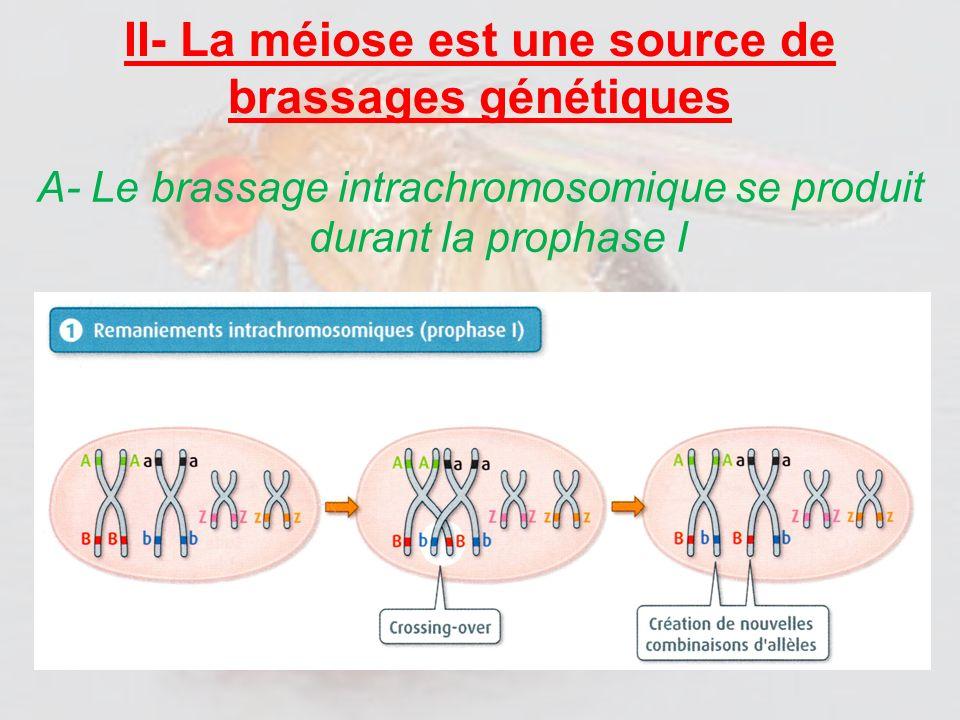 II- La méiose est une source de brassages génétiques