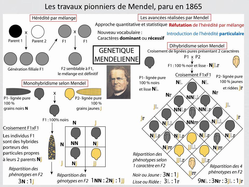 Les travaux pionniers de Mendel, paru en 1865