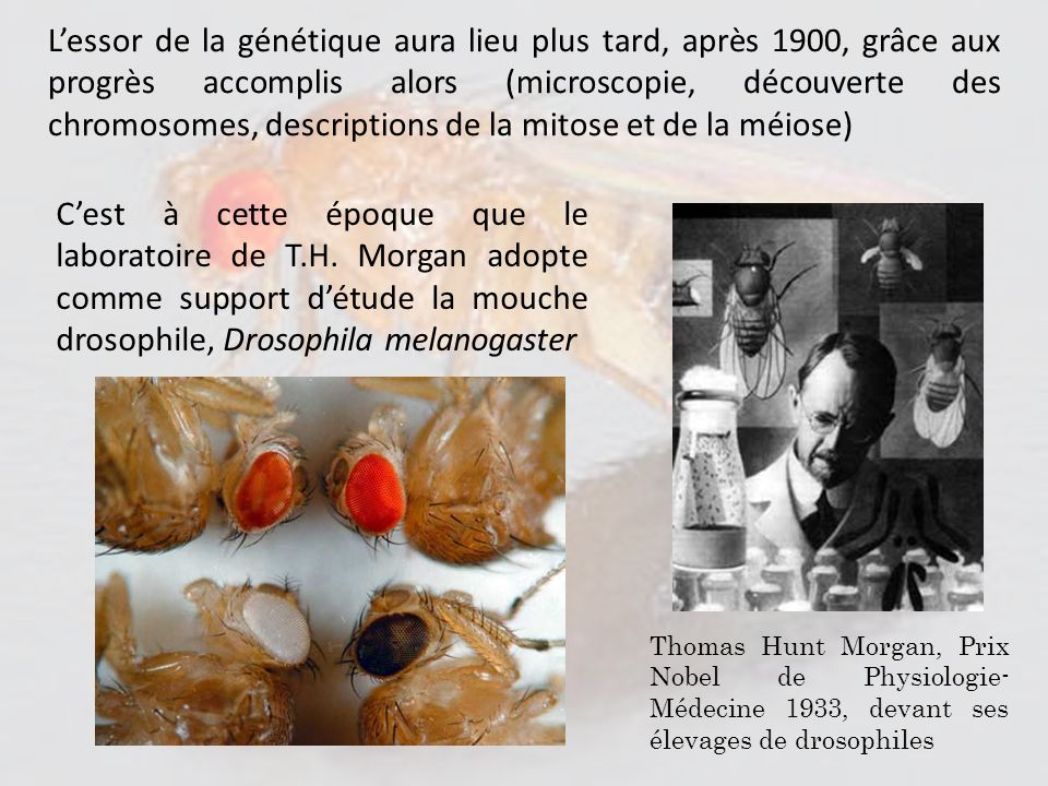 L'essor de la génétique aura lieu plus tard, après 1900, grâce aux progrès accomplis alors (microscopie, découverte des chromosomes, descriptions de la mitose et de la méiose)