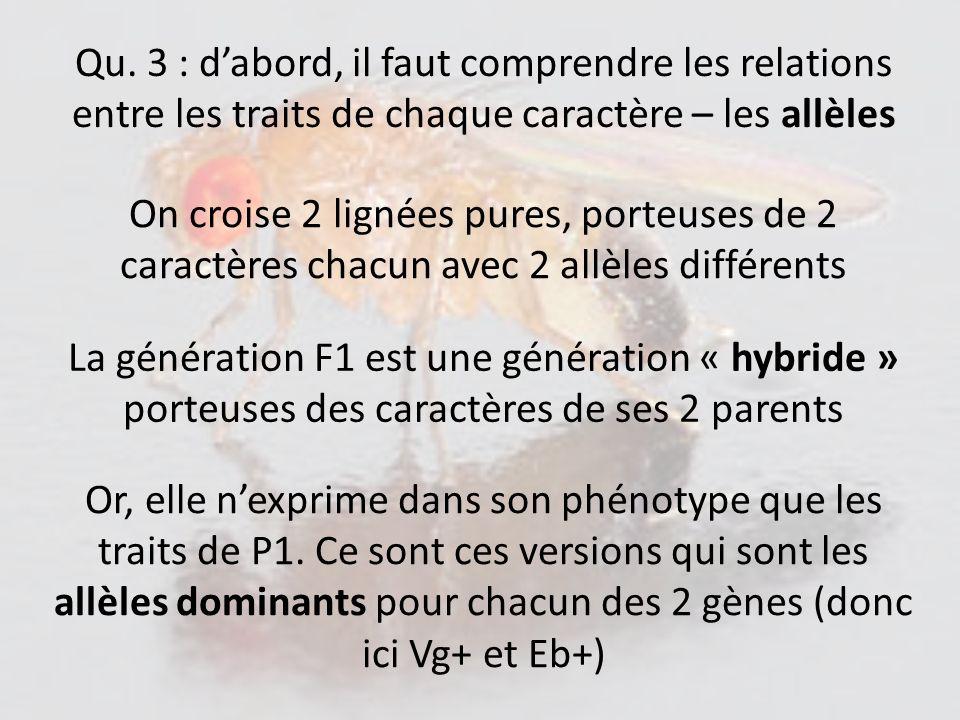 Qu. 3 : d'abord, il faut comprendre les relations entre les traits de chaque caractère – les allèles