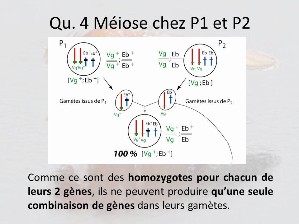 Qu. 4 Méiose chez P1 et P2