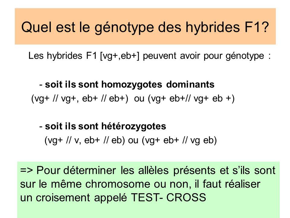 Quel est le génotype des hybrides F1