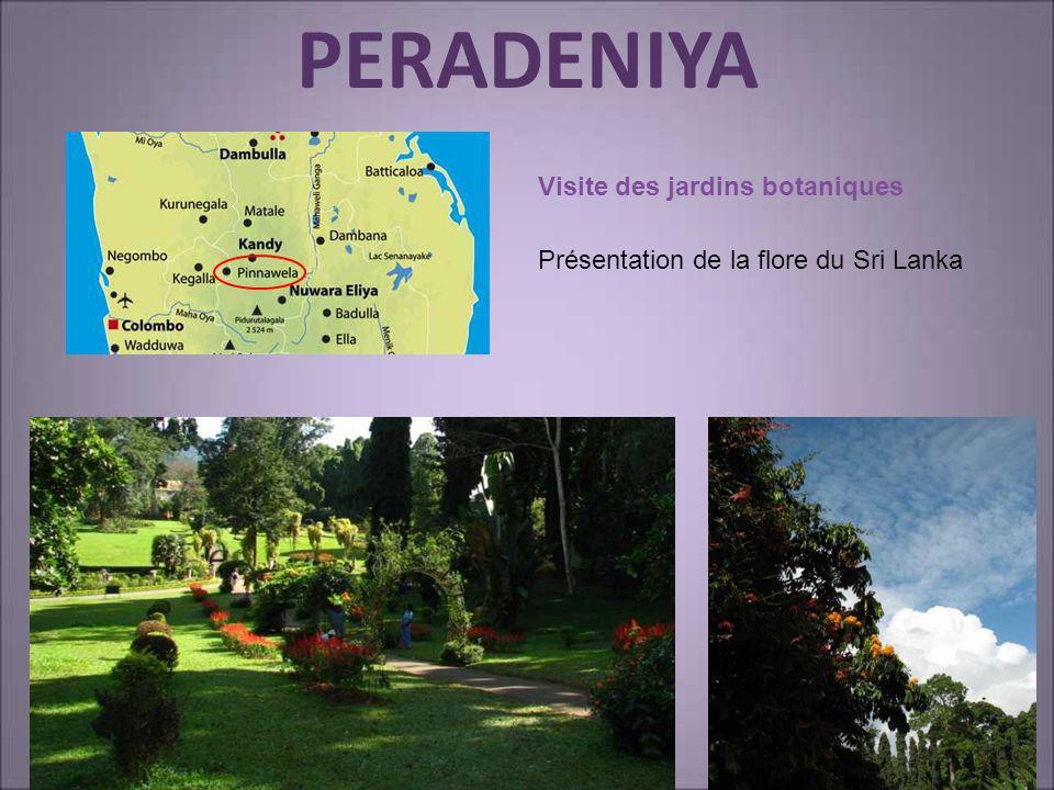 PERADENIYA Visite des jardins botaniques