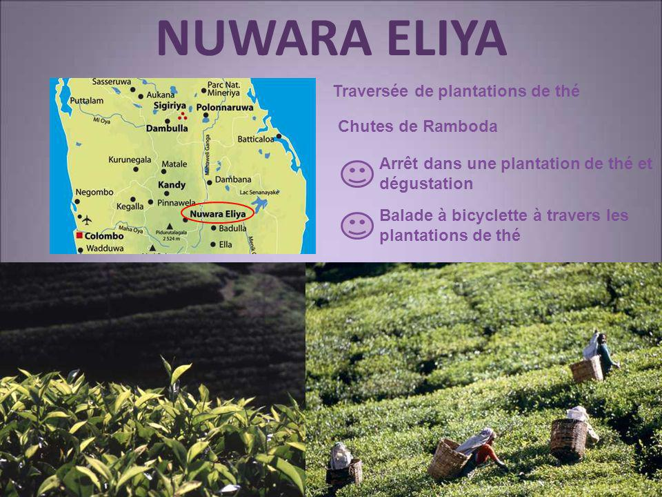 NUWARA ELIYA Traversée de plantations de thé Chutes de Ramboda