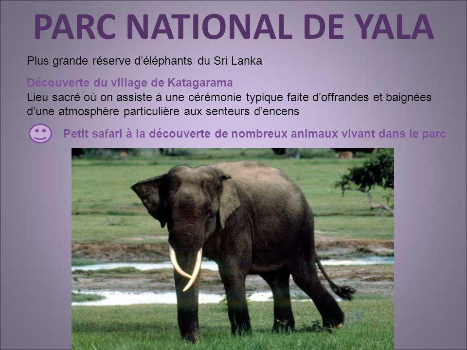 PARC NATIONAL DE YALA Plus grande réserve d'éléphants du Sri Lanka