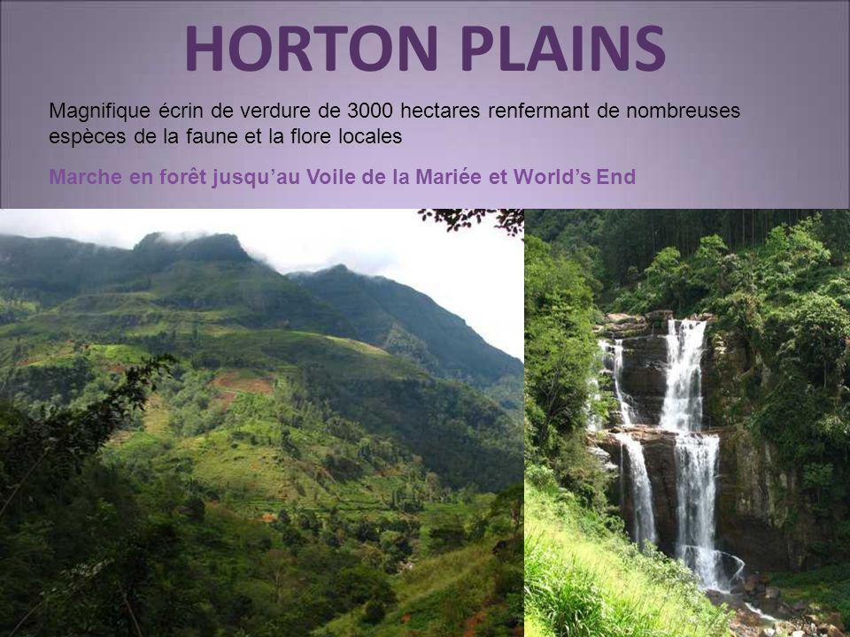 HORTON PLAINS Magnifique écrin de verdure de 3000 hectares renfermant de nombreuses espèces de la faune et la flore locales.