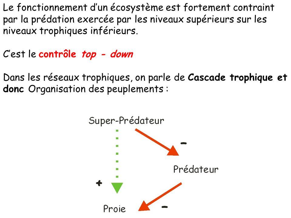 Le fonctionnement d'un écosystème est fortement contraint par la prédation exercée par les niveaux supérieurs sur les niveaux trophiques inférieurs.