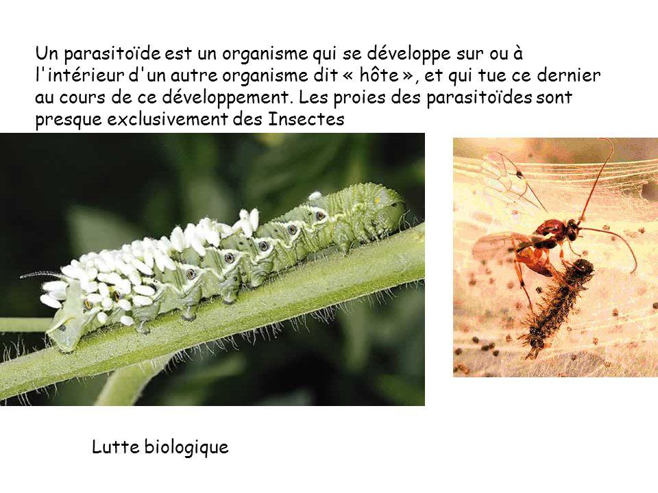 Un parasitoïde est un organisme qui se développe sur ou à l intérieur d un autre organisme dit « hôte », et qui tue ce dernier au cours de ce développement. Les proies des parasitoïdes sont presque exclusivement des Insectes