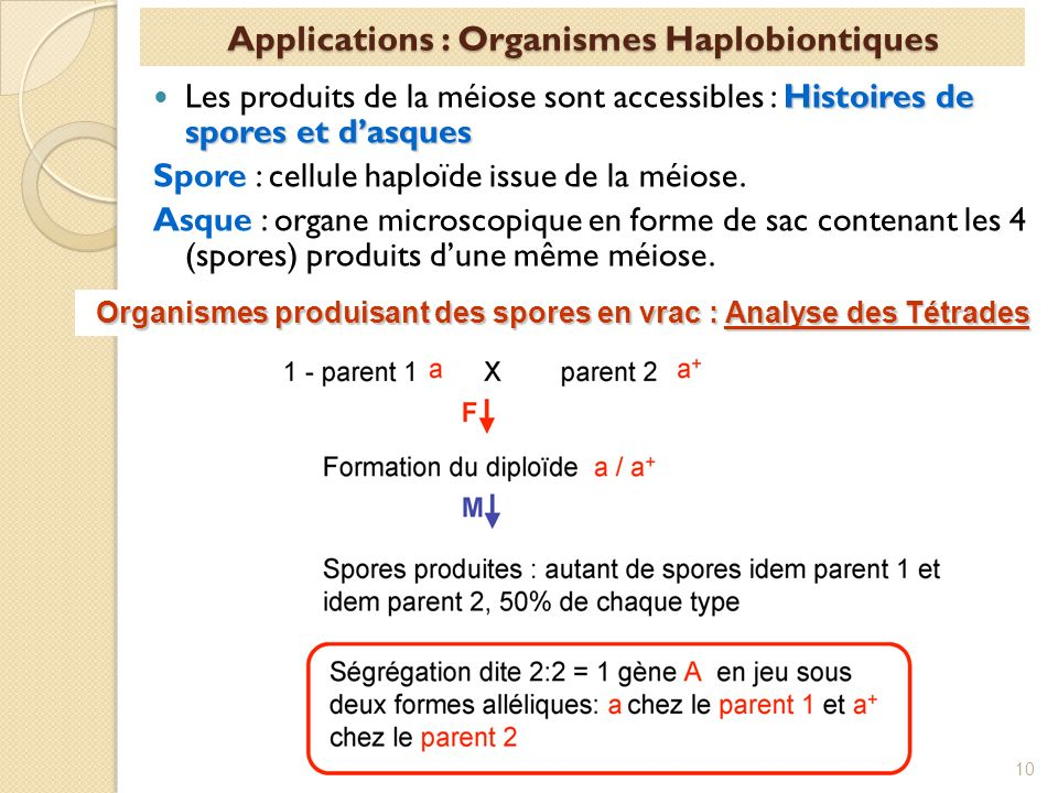 Applications : Organismes Haplobiontiques