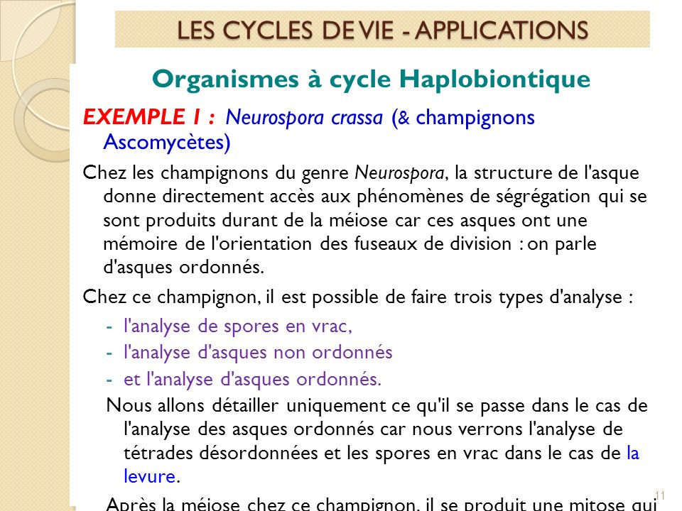 Organismes à cycle Haplobiontique