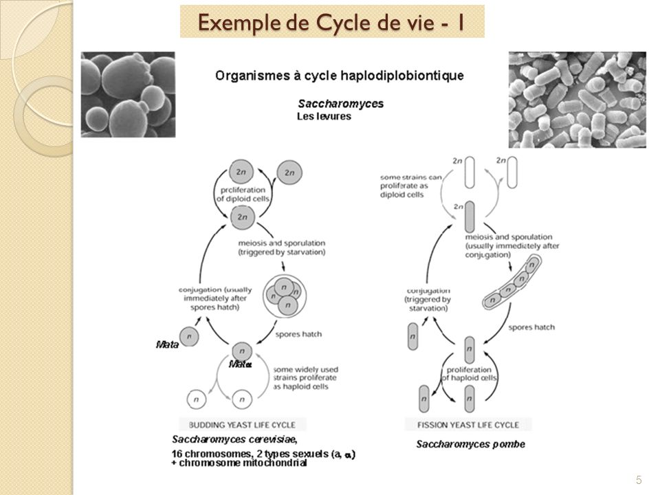 Exemple de Cycle de vie - 1