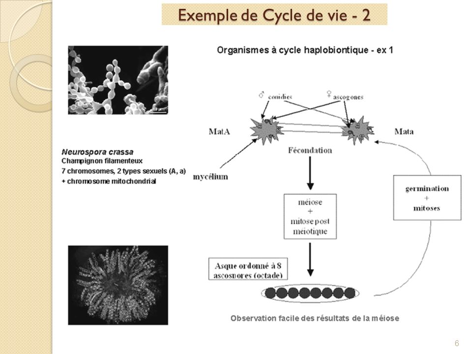 Exemple de Cycle de vie - 2