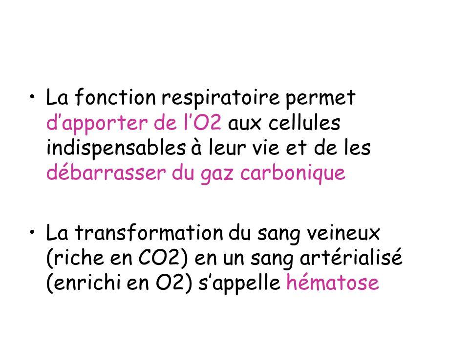 La fonction respiratoire permet d'apporter de l'O2 aux cellules indispensables à leur vie et de les débarrasser du gaz carbonique