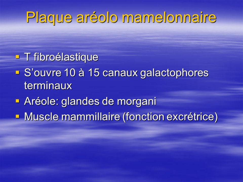 Plaque aréolo mamelonnaire