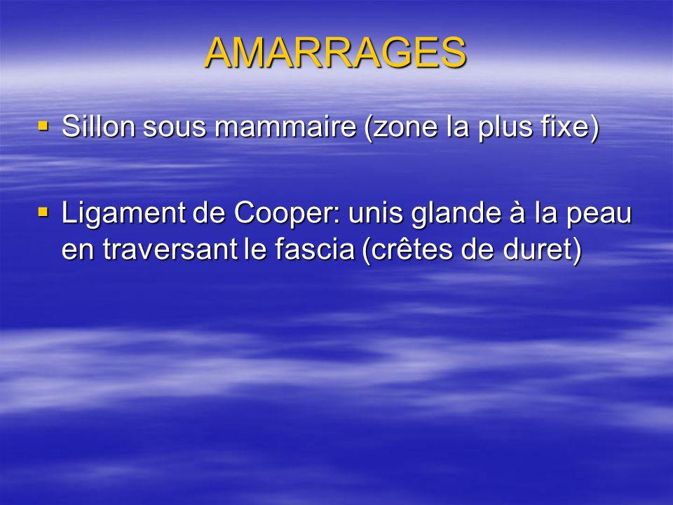 AMARRAGES Sillon sous mammaire (zone la plus fixe)