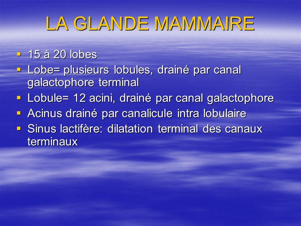 LA GLANDE MAMMAIRE 15 à 20 lobes