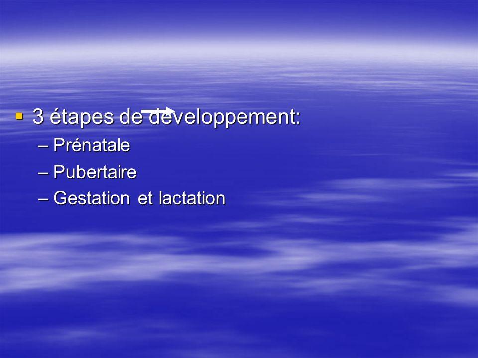 3 étapes de développement: