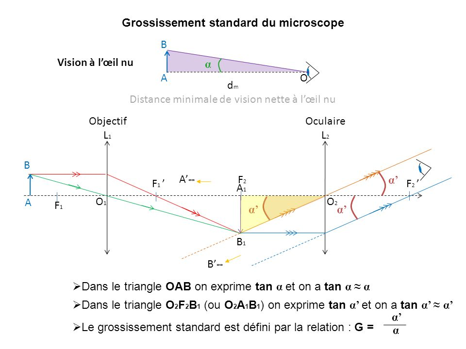 Grossissement standard du microscope