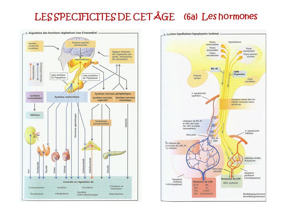LES SPECIFICITES DE CET ÂGE (6a) Les hormones