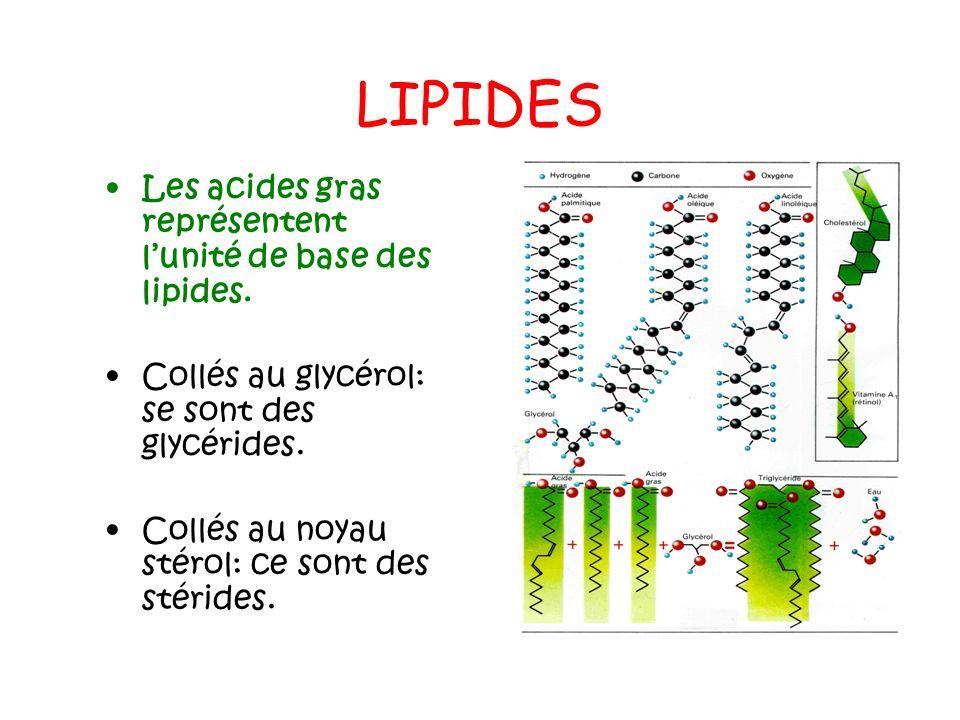 LIPIDES Les acides gras représentent l'unité de base des lipides.