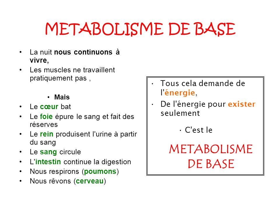 METABOLISME DE BASE METABOLISME DE BASE