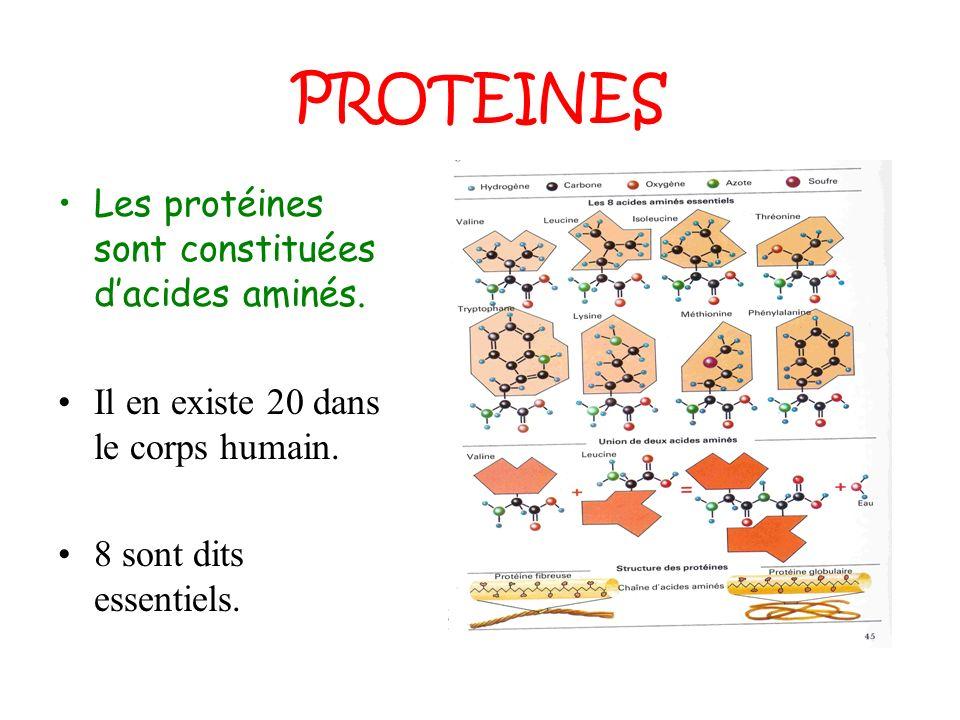 PROTEINES Les protéines sont constituées d'acides aminés.