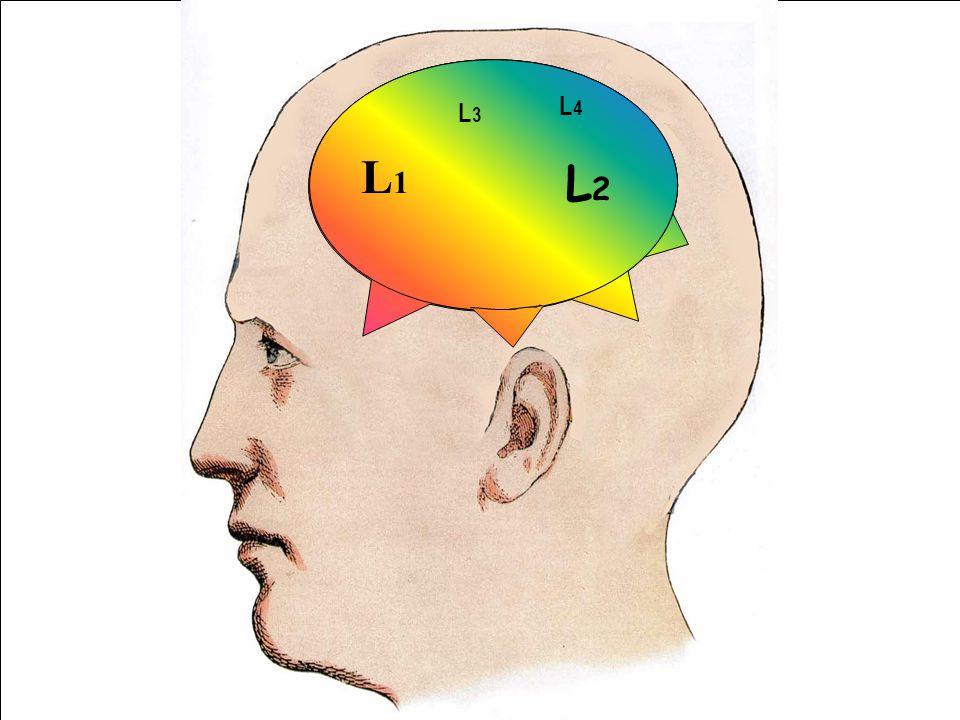 L1 L4. L3. L1. L2.
