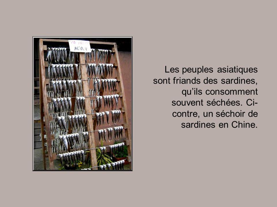 Les peuples asiatiques sont friands des sardines, qu'ils consomment souvent séchées.