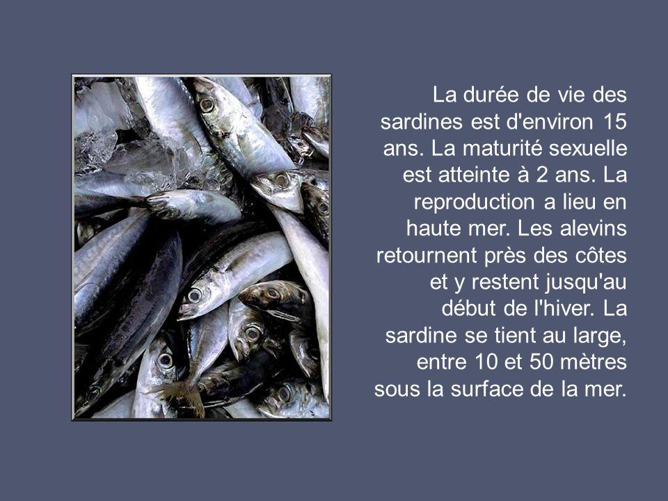La durée de vie des sardines est d environ 15 ans