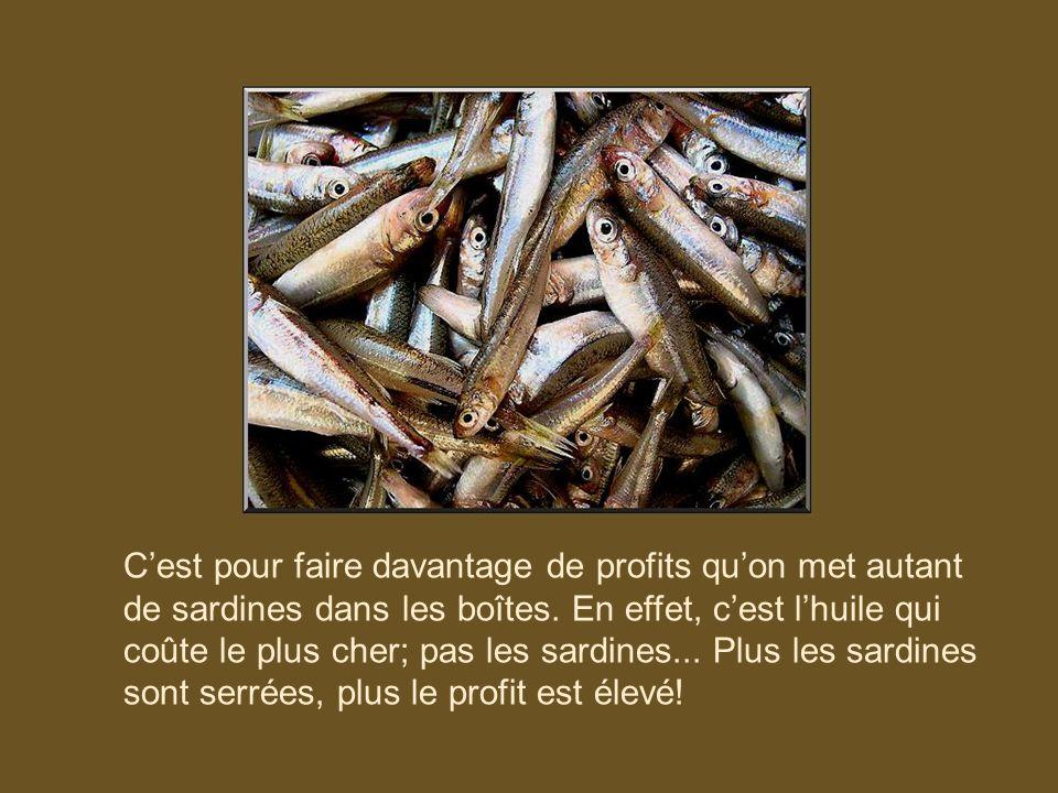 C'est pour faire davantage de profits qu'on met autant de sardines dans les boîtes.