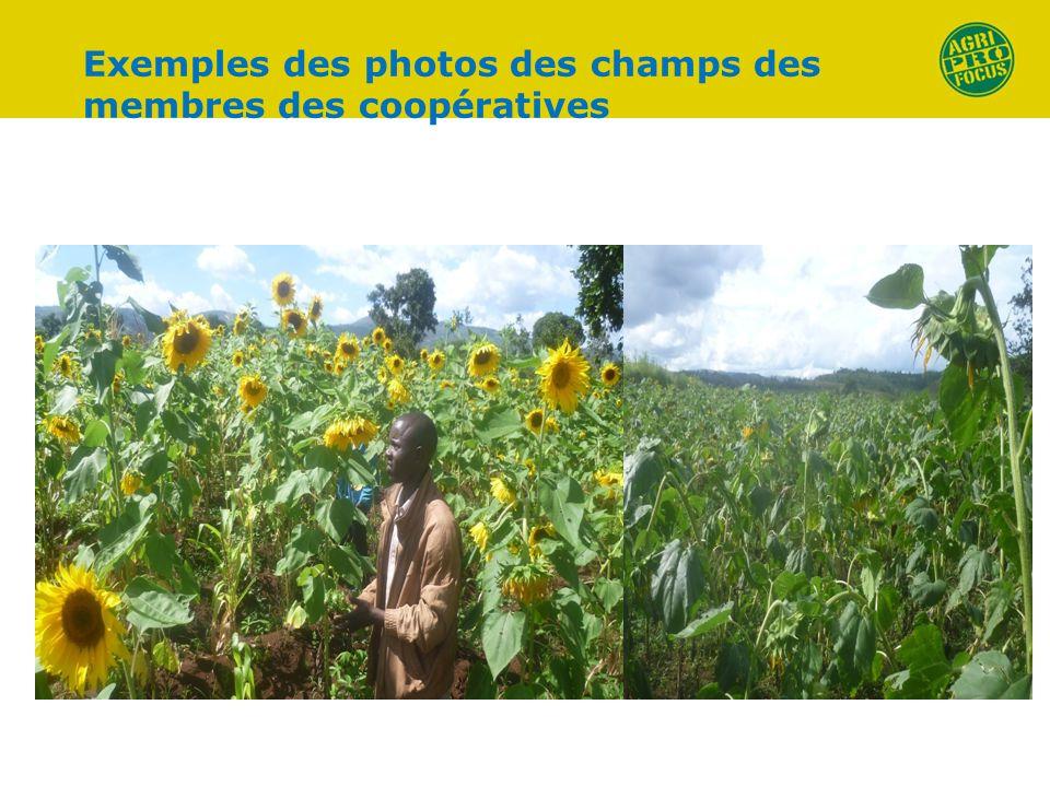 Exemples des photos des champs des membres des coopératives