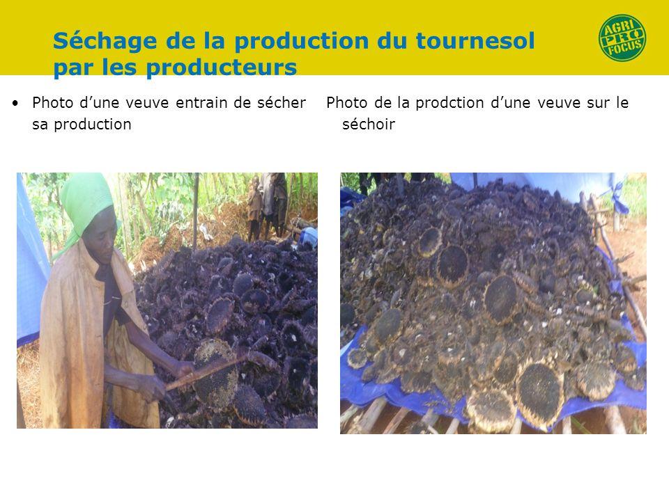 Séchage de la production du tournesol par les producteurs